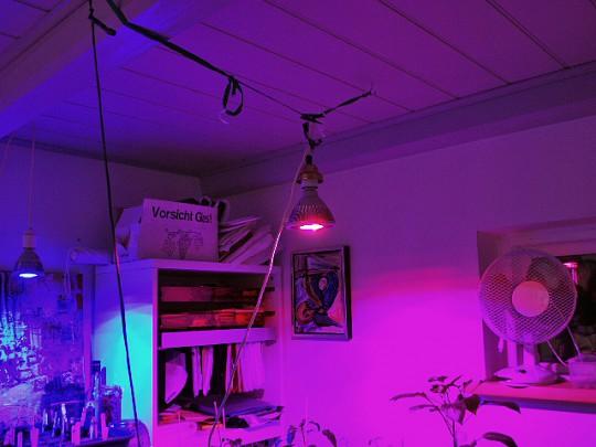 kunstig lys til planter