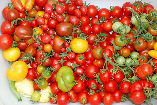 misdannet tomat