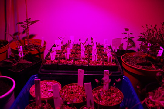 Led belysning planter