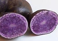 Blå kartofler læggekartofler