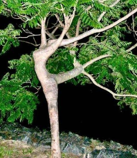 Havenyt.dk   træ til forhaven