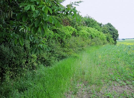 Havenyt.dk   hegn mellem have og marker