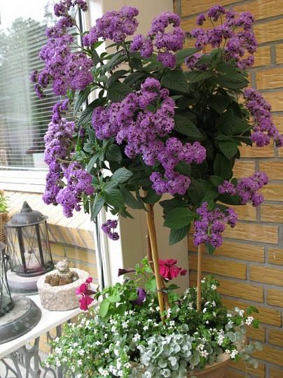 opstammede blomster til krukker