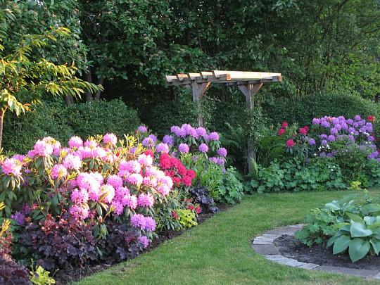 Rhododendron plantning hvornår – Møbler til terrasse