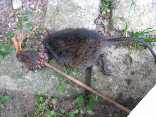 Rotter i jorden
