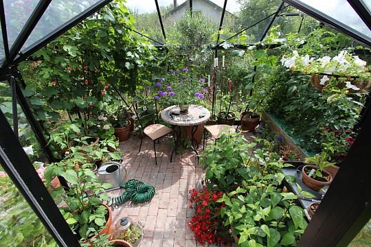 hvad kan man dyrke i et drivhus
