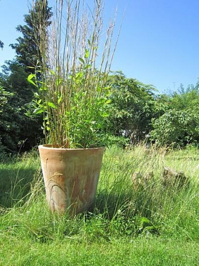 bambus i krukker Havenyt.dk   Bambus i krukke bambus i krukker