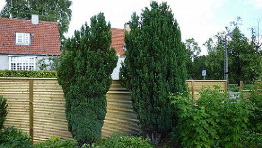 Cypres træer | Møbler til terrassen og haven