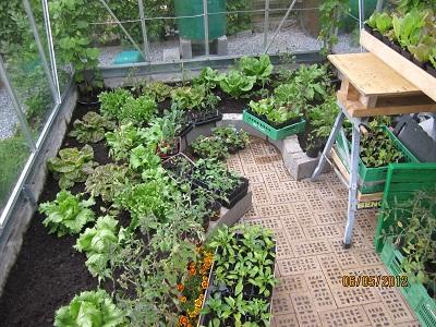 Planter til drivhus