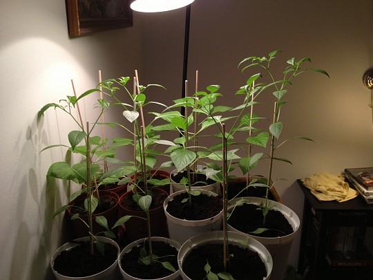 lysstofrør til planter