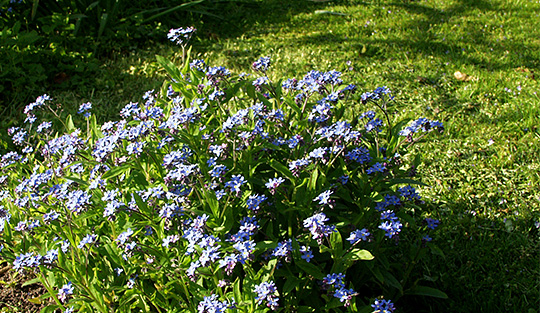 blomstereng i haven