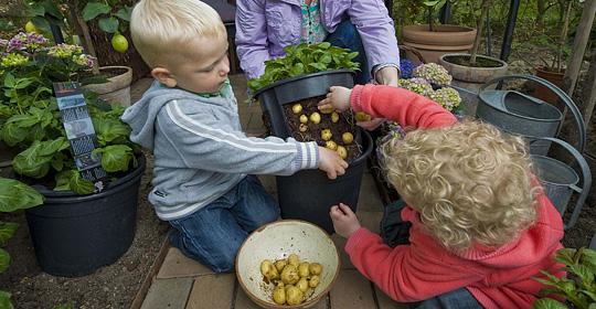 kartofler høstes hvornår