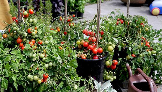 Havenyt.dk   frugt, bær og grønt fra egen have