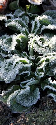 Tåler oljemaling frost
