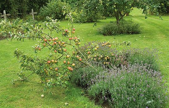 frugttræer gødning