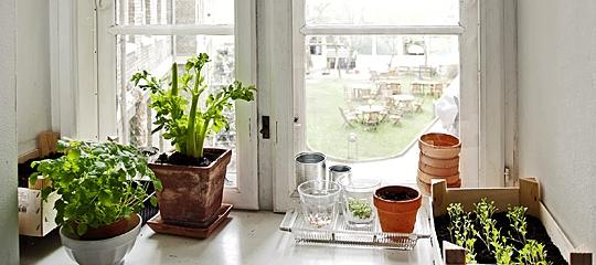 planter i vindueskarmen