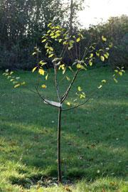 Blommetræ plantning