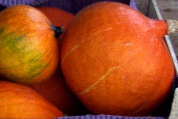 Nyhøstede hokkaido. foto: karna maj