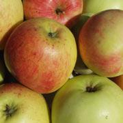 james grieve æble