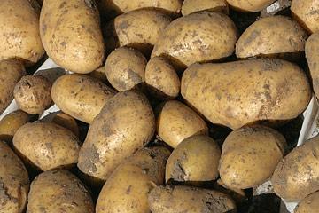 Havenytdk Store Eller Små Kartofler