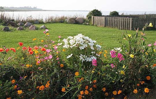 Havenyt.dk   kan latyrus vokse i et blomsterbed uden opbinding?