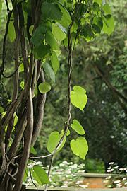 Haveselskabets have på frederiksberg foto karna maj