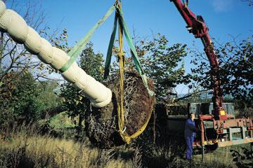 plantning af træer med klump
