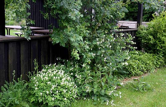 Havenyt.dk - Havenyt uge 24, 2012