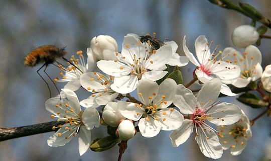 ดอกไม้เดนมาร์กตอนหน้าร้อน ทางเกาะทางเหนือ งามๆๆมาฝากบ้านมหาสุคนจ้า