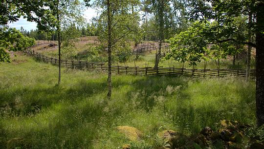 Den svenske natur er smuk i juni foto jens thejsen